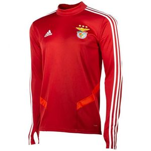 Football homme ADIDAS Training top Benfica Lisbonne 2019/20